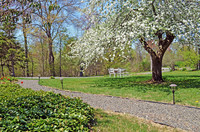Front yard view with blooming apple tree